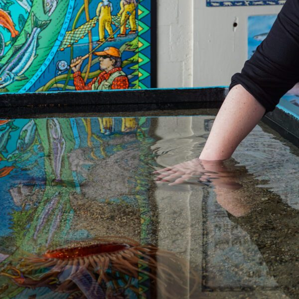 Experiencing the indoor touch tank at the Sitka Sound Science Center